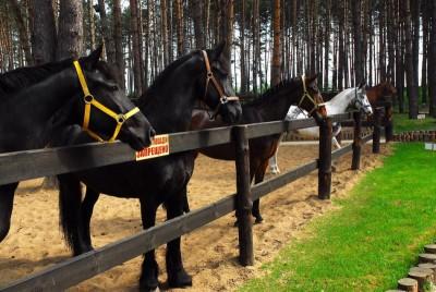 конный клуб в Подольске